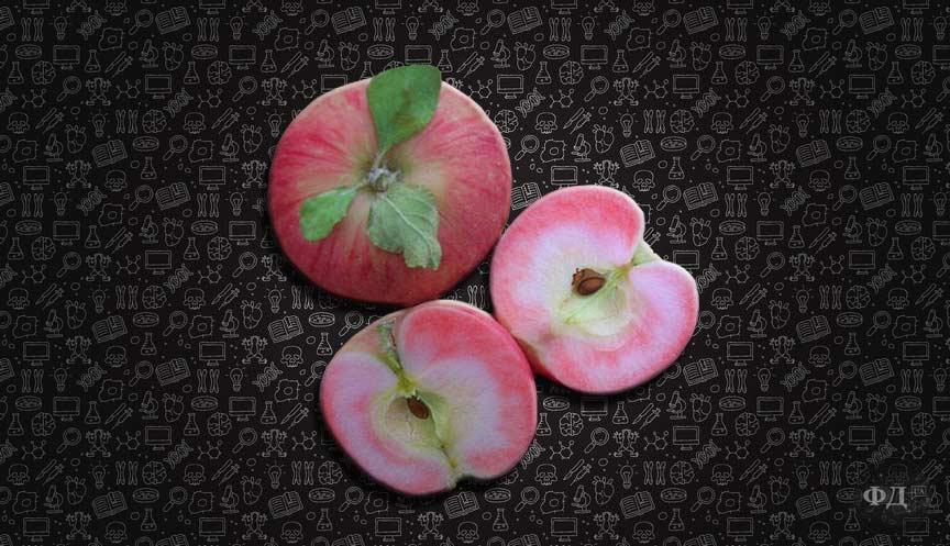 Cорт яблук з м'якоттю рожевого кольору