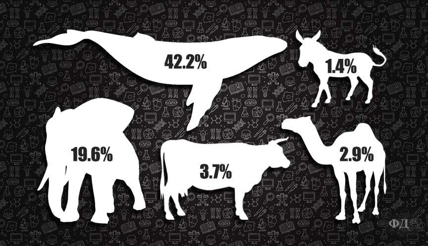 Жирність молока відомих видів ссавців